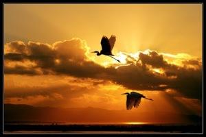 BirdsFlyingAtSunrise